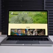 WEB-дизайн в формате онлайн - интервью с куратором курса  Марией Илларионовой